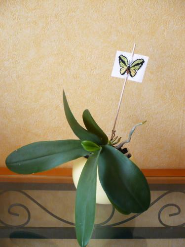 papillon-pique-a-planter.jpg