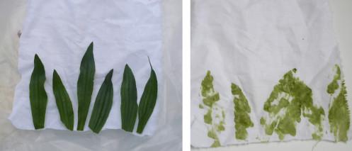 teinture-avec-herbes--2-.jpg